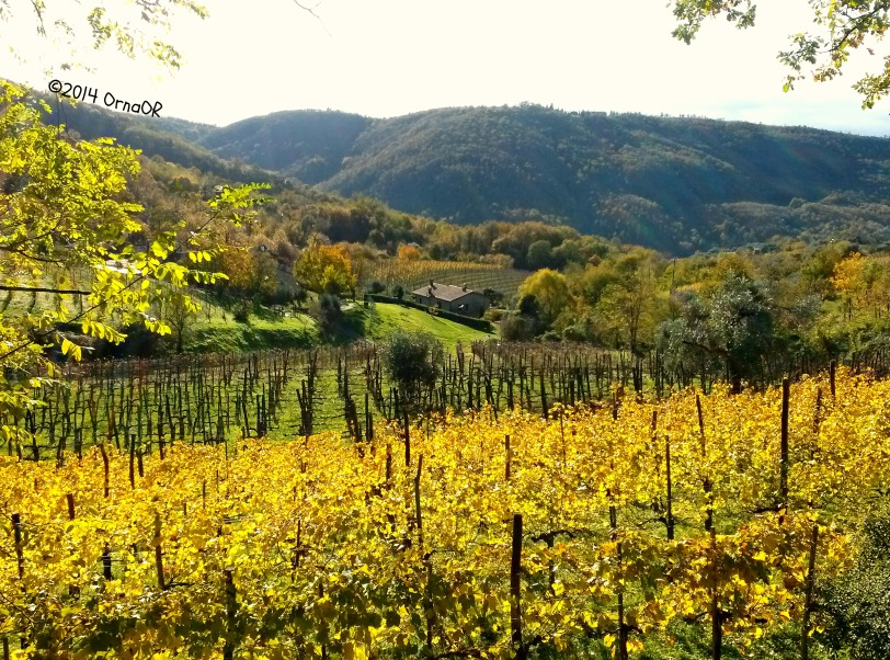 The Euganean Hills: vines in October