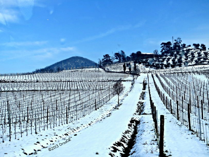 Euganean Hills, Veneto: vines in the snow