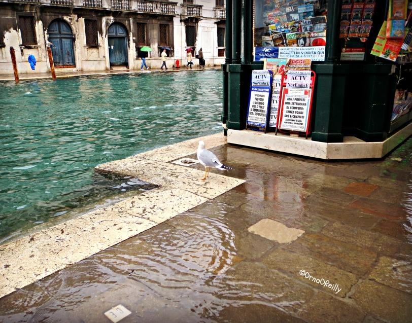 Alta Aqua in Venice
