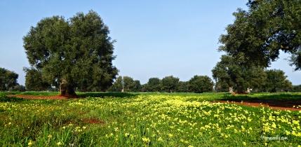 Puglia l ©ornaoreilly.com
