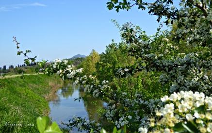 Euganean Hills l ©ornaoreilly.com