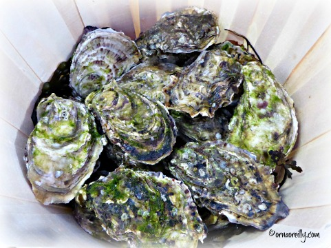 Oysters, fresh from Galway Bay