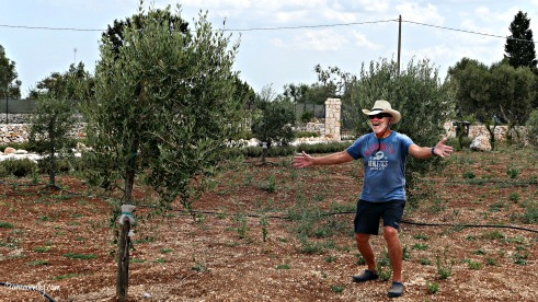 Olive trees July 2018