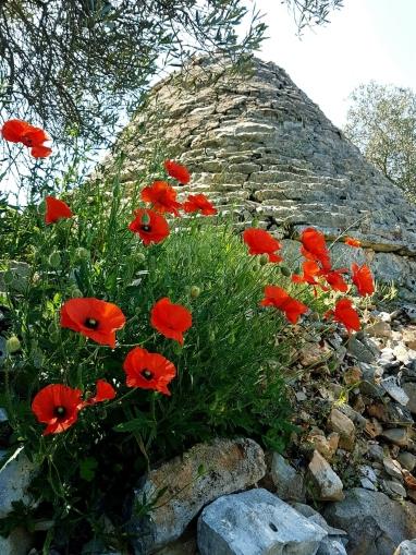 Trullo. Valle d'Itria