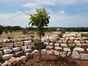 New Rockery May 2018