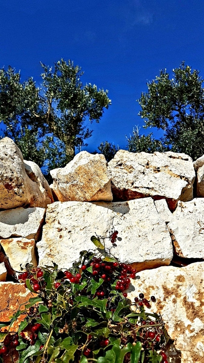 Living in Puglia l ©ornaoreilly.com