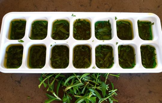 Tarragon for freezing